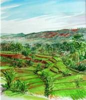 View on the sawahs of Cikananga Java Indonesia. Watercolour 50 x 40 cm.  » Click to zoom ->